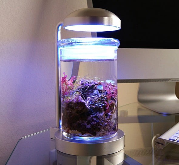 PJ Reefs Miniature Saltwater Aquarium Lamp Gift Idea For Pet Fish Owner