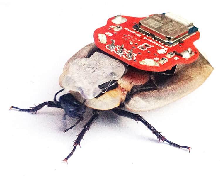 Backyard Brains RoboRoach Controlable Insect