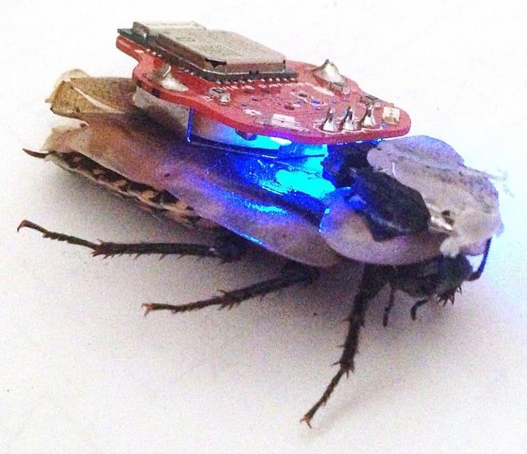 Backyard Brains RoboRoach Weird Cockroach Toy