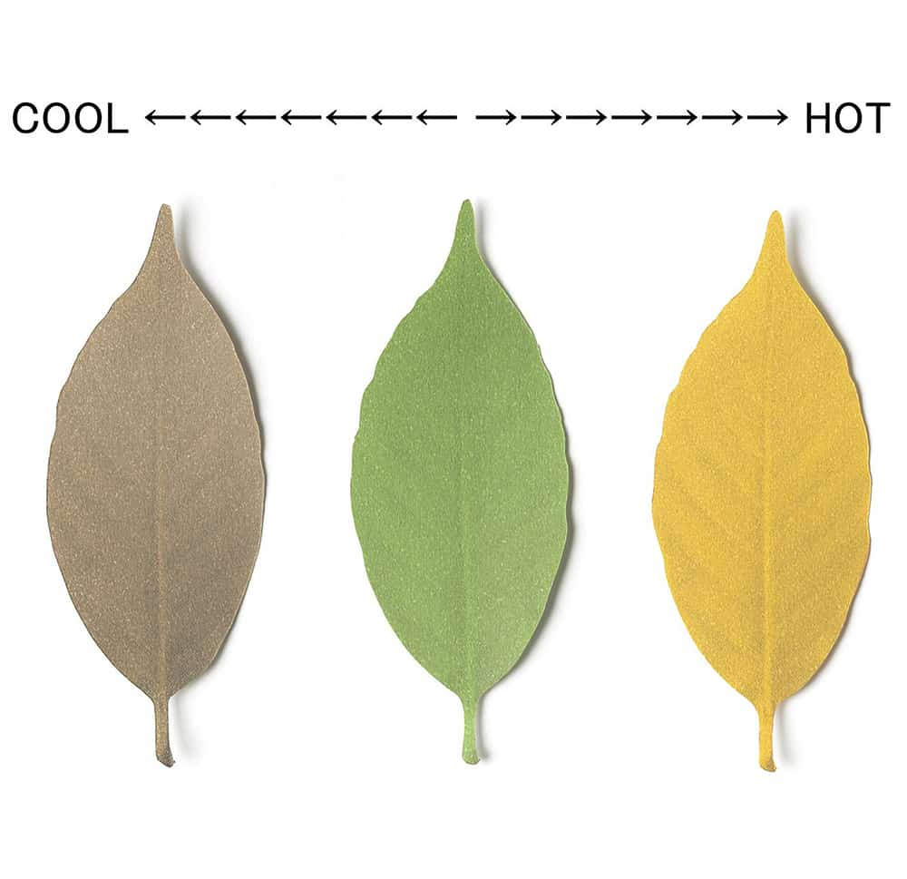 Hideyuki Kumagai Leaf Thermometer Paper Good for Outdoors