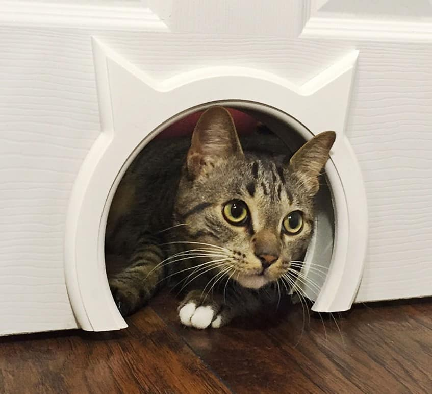 Kitty Pass Interior Cat Door Gift Idea For Cat Person