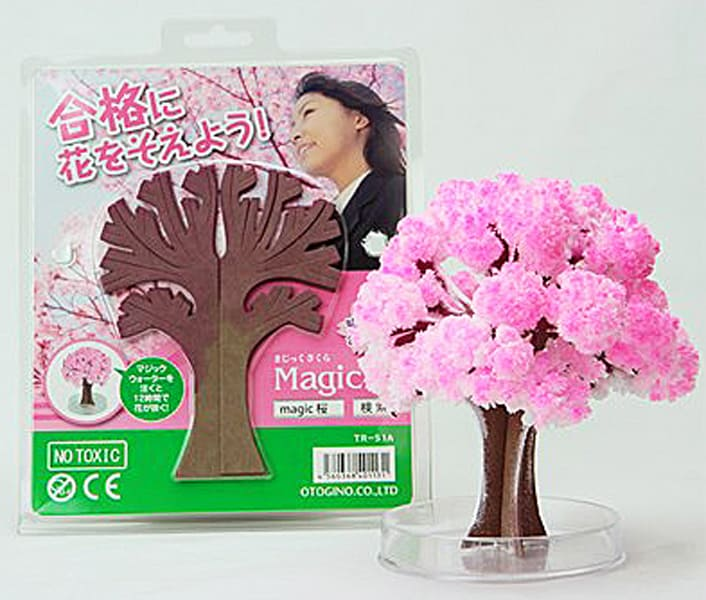 Magic Sakura Tree Small Indoor Tree