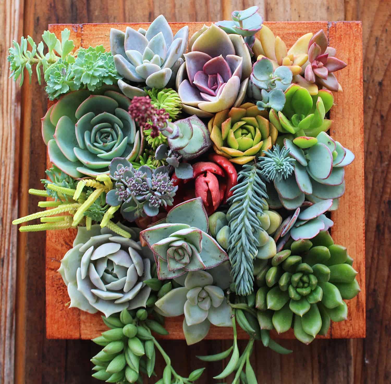 Succulent Wonderland Vertical Succulent Garden Cool Wall Design