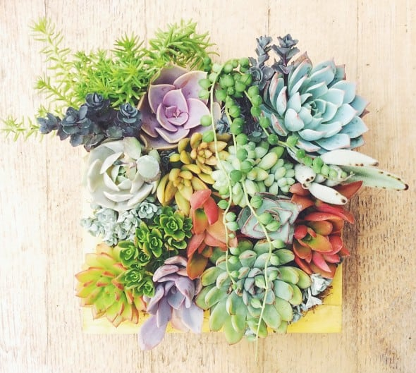 For a more succulent looking wall.