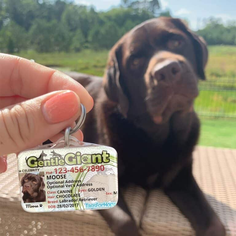 Tags for Hope Pet Tag Dog and Cat Identification