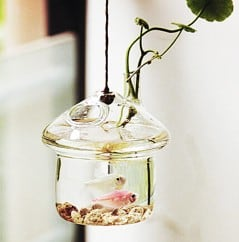 Leave your fish and plants hanging.