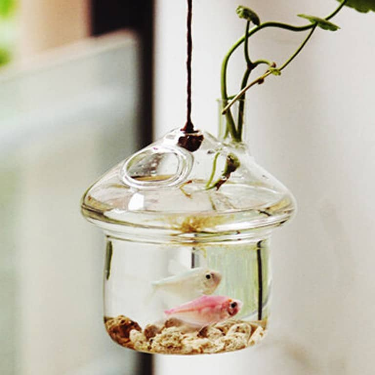 New Dream World Hanging Mushroomhouse Terrarium Nice Gift Idea