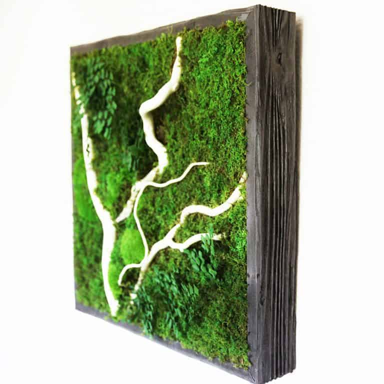 Artisan Moss No Care Green Wall Art Cool Novelty Item