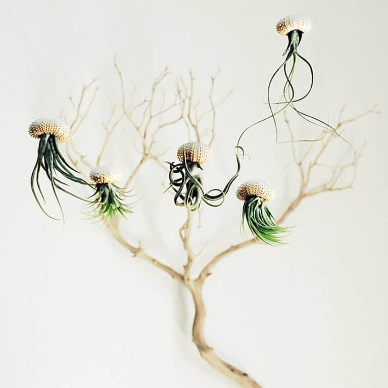Petit Beast Jellyfish Air Plant Hanging Planter