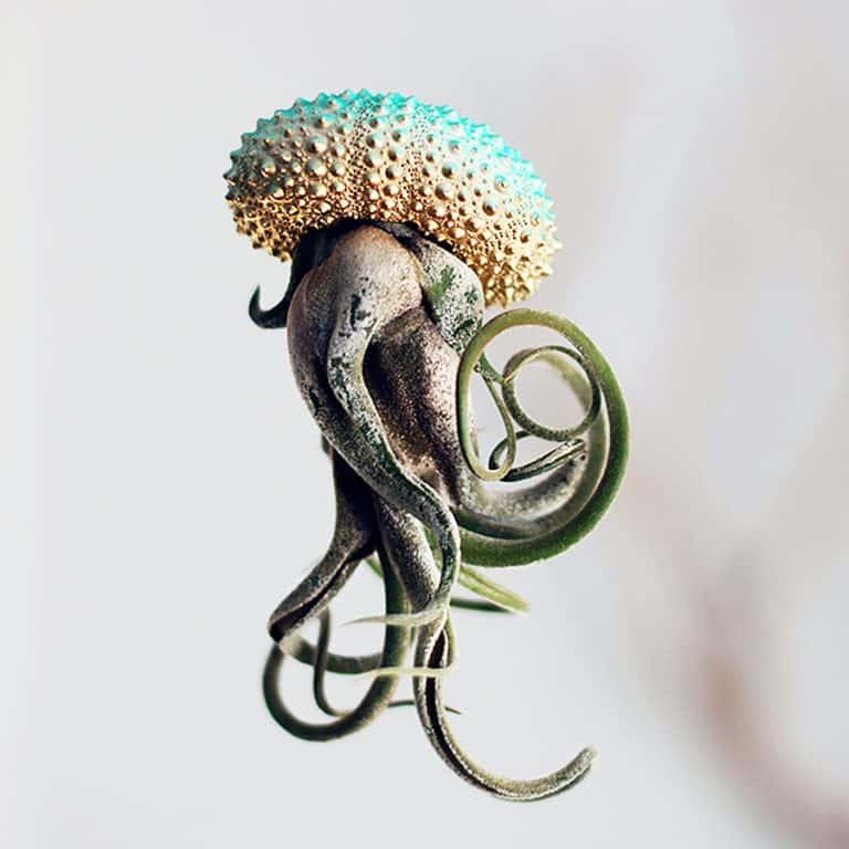 Petit Beast Jellyfish Air Plant House Gardening