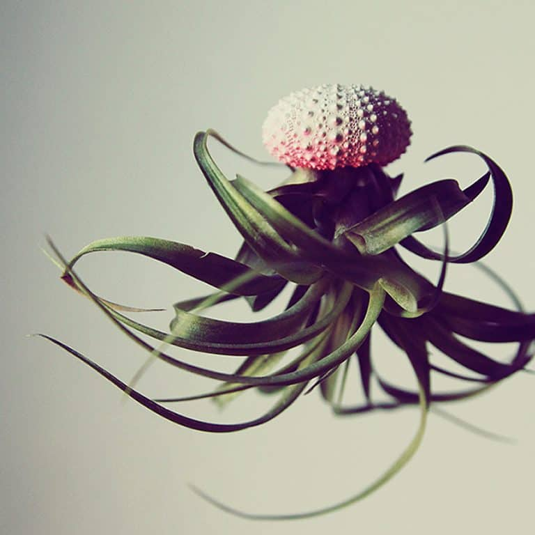 Petit Beast Jellyfish Air Plant Nice Home Decor
