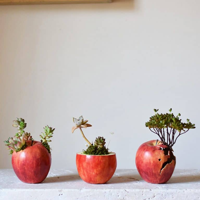 Harimogura Sliced Apple Pot Planter Things for Plant Lovers