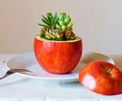 How do you like them succulent-planted apples?
