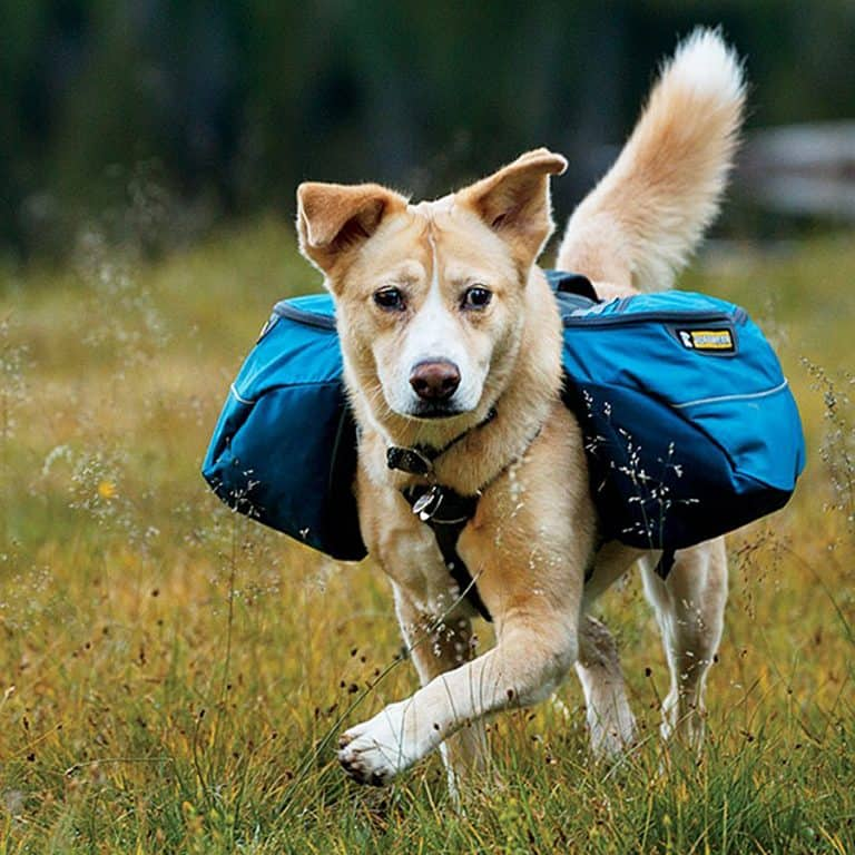 Ruffwear Approach Dog Backpack Great for Weekend Adventures