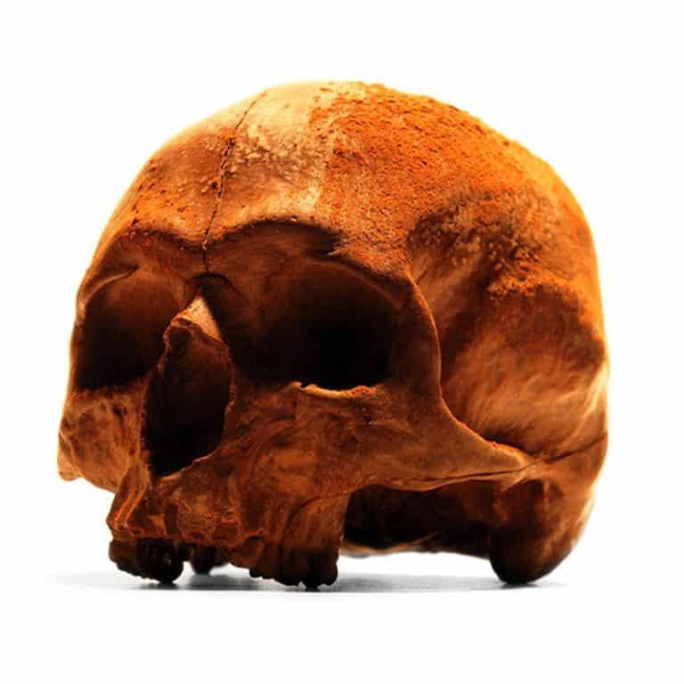 Black Chocolate Co Anatomically Correct Chocolate Skull Life size