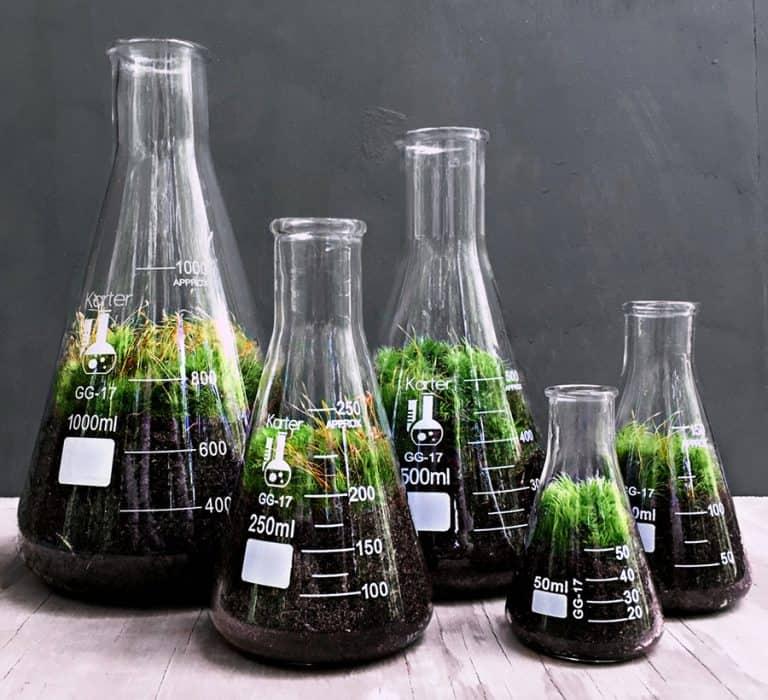 doodle-birdie-chemistry-flasks-terrarium-set-break-resistant