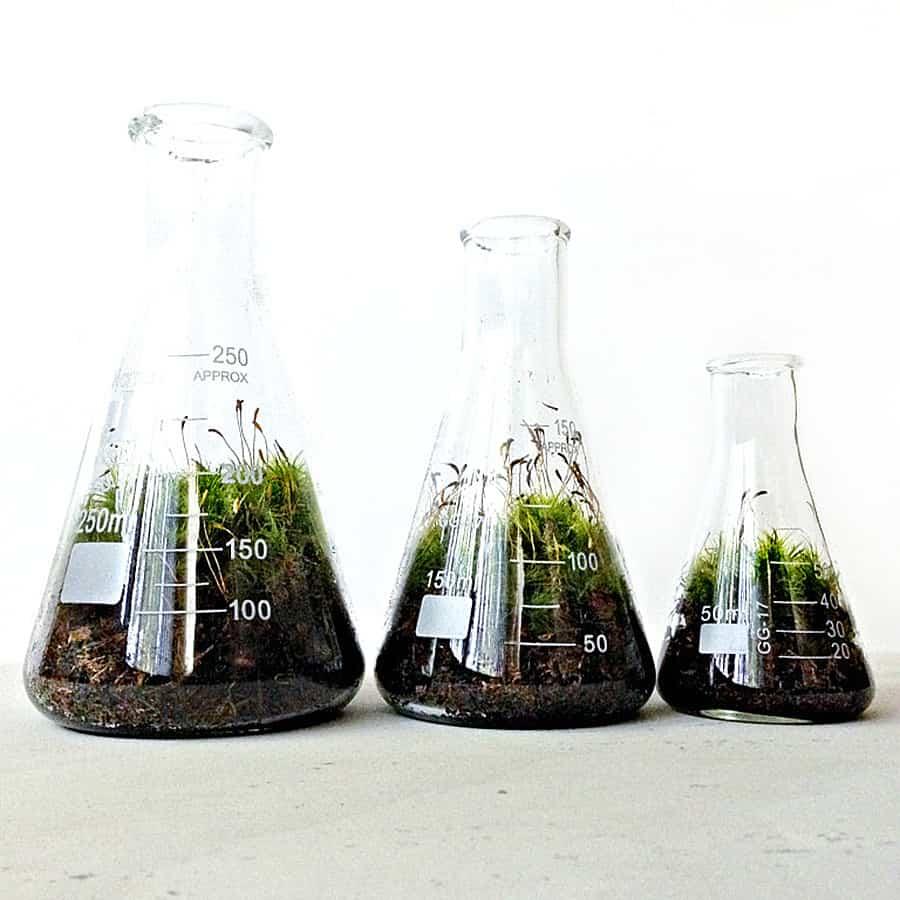 doodle-birdie-chemistry-flasks-terrarium-set-glass-flask