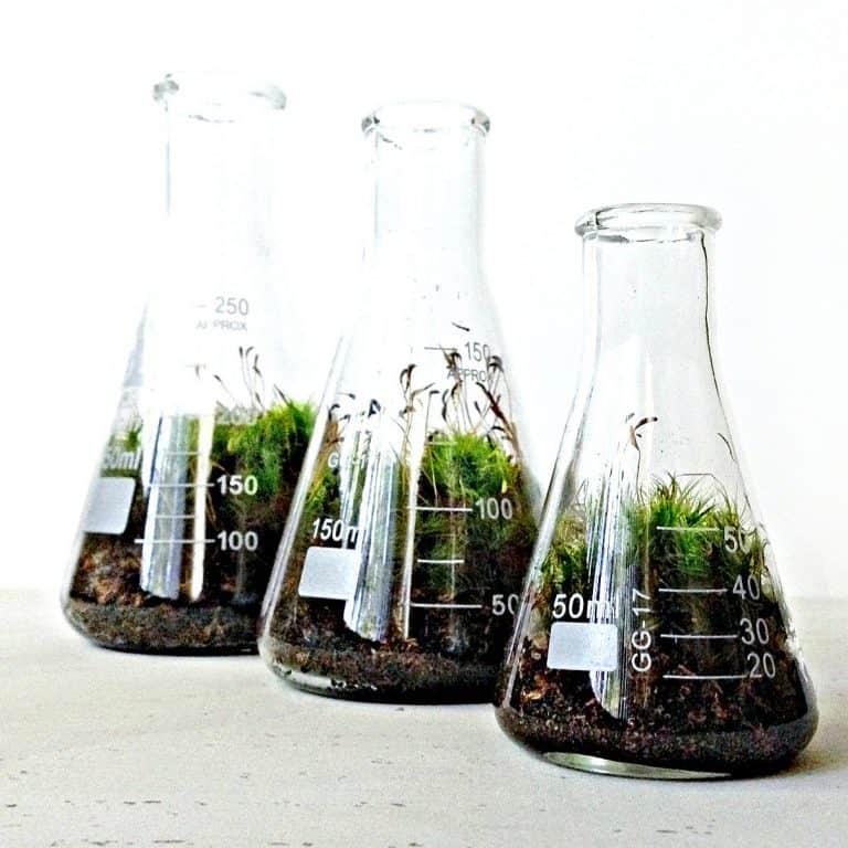 doodle-birdie-chemistry-flasks-terrarium-set-live-moss