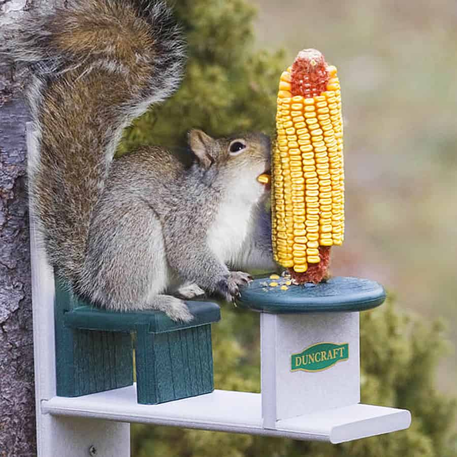Teach squirrels how to eat with proper table manners.