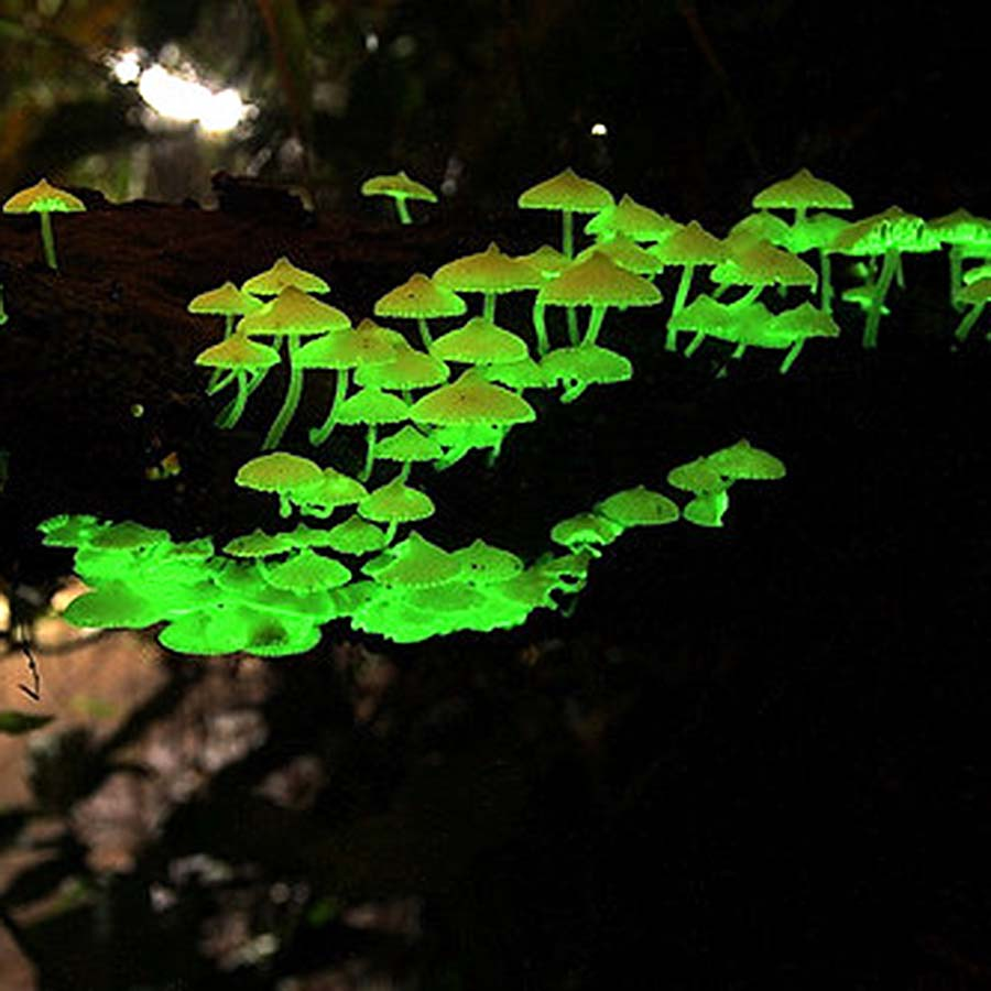 Make Fancy Border Gimp X moreover Equinox also Police additionally Forest Organics Glow In The Dark Mushroom Habitat Kit Great For Terrariums besides In Texas We Dont Diall Shirt Square Grande. on fancy border