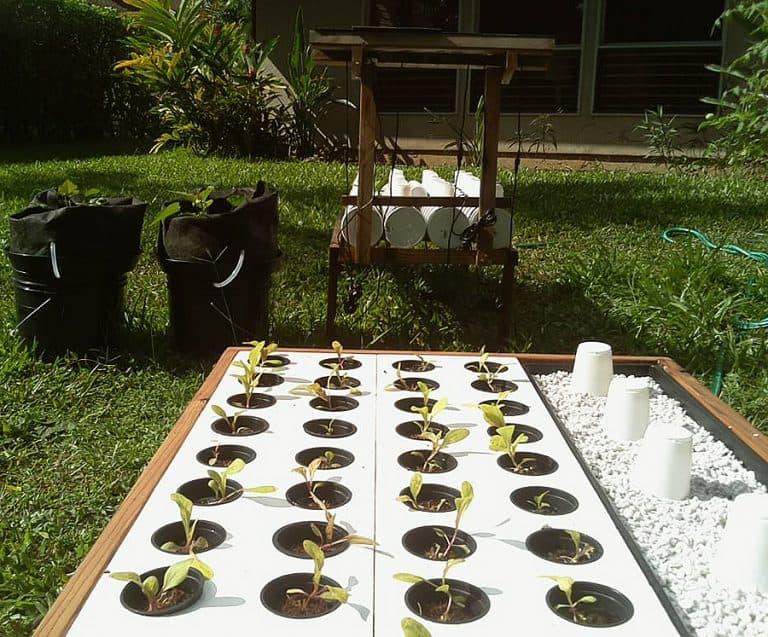 growbot-abundance-sustainable-farmed-redwood