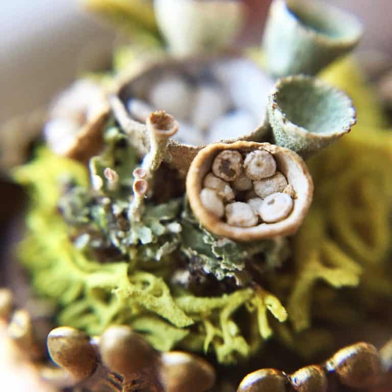 naturephilia-white-birds-nest-terrarium-ring-women-accessory