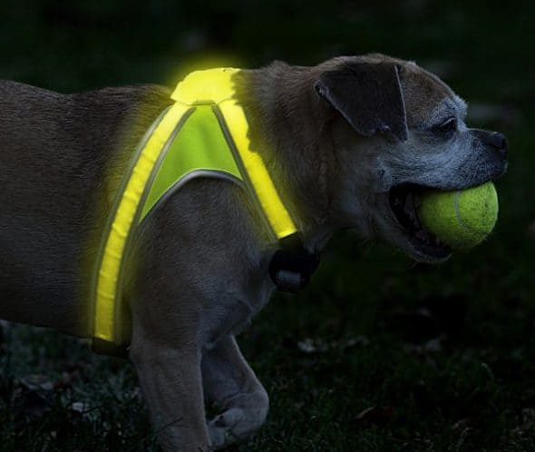 noxgear-light-hound-illuminated-and-reflective-dog-vest-cool-pet-gift-to-buy