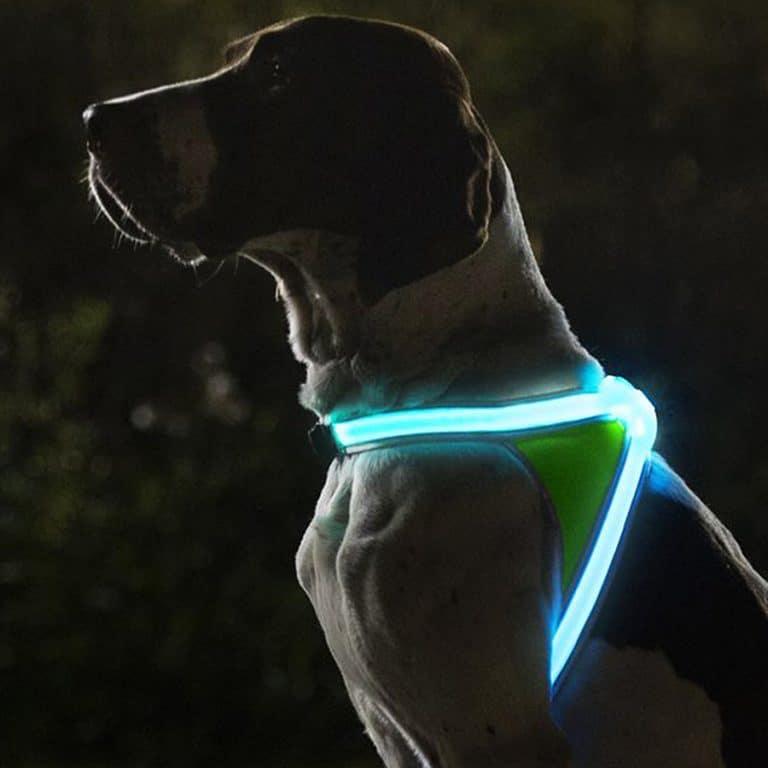 noxgear-light-hound-illuminated-and-reflective-dog-vest-pet-accessory