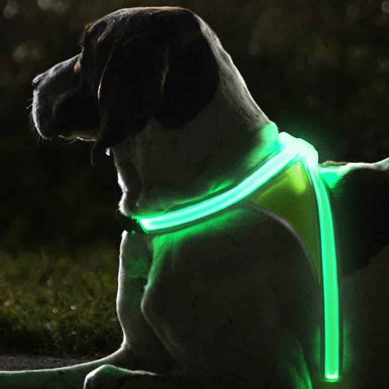 noxgear-light-hound-illuminated-and-reflective-dog-vest-usb-rechargable