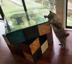 Puzzling comfort for your feline friend.