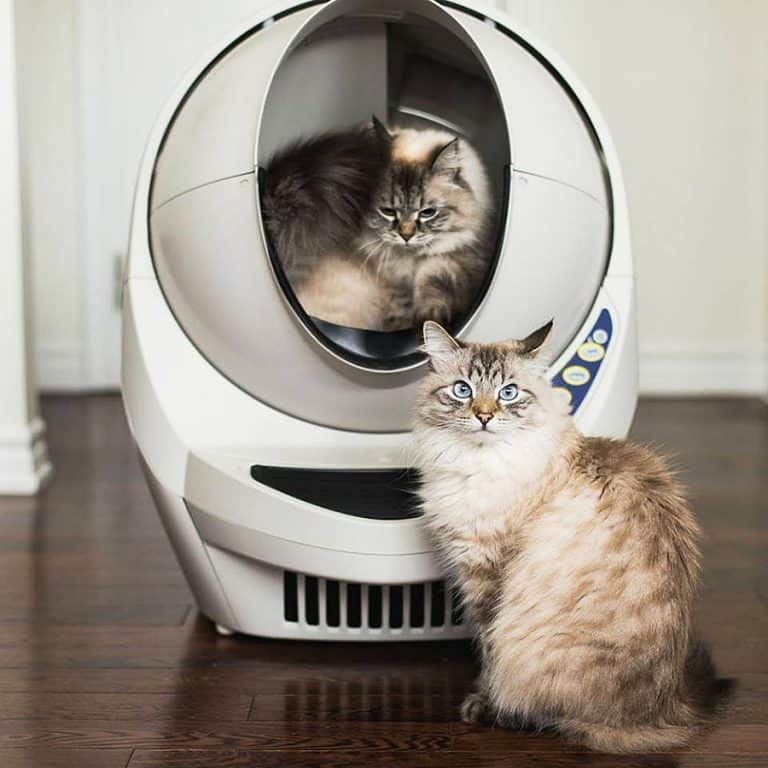 litter-robot-iii-open-air-automatic-self-cleaning-litter-box-cat-owner-item
