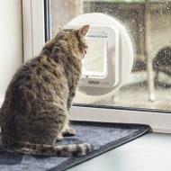 sureflap-microchip-pet-door-innovative-cat-product