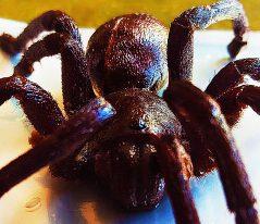 Take a bite out of arachnophobia.