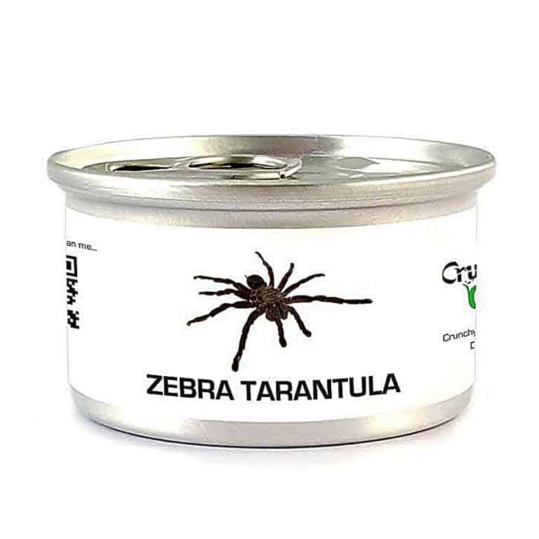crunchy-critters-edible-zebra-tarantula-ready-to-eat