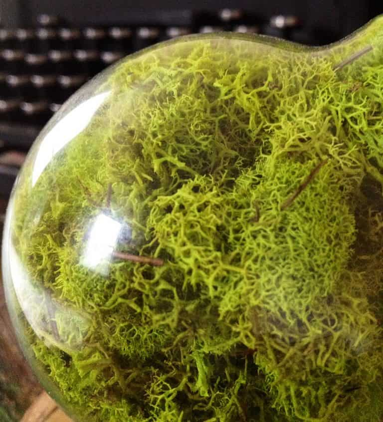 fox-and-dye-design-repurposed-lightbulb-moss-terrarium-fresh-green-moss
