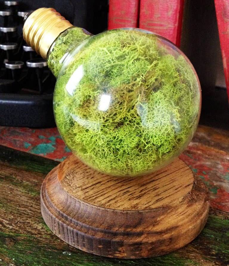 fox-and-dye-design-repurposed-lightbulb-moss-terrarium-handcrafted-items