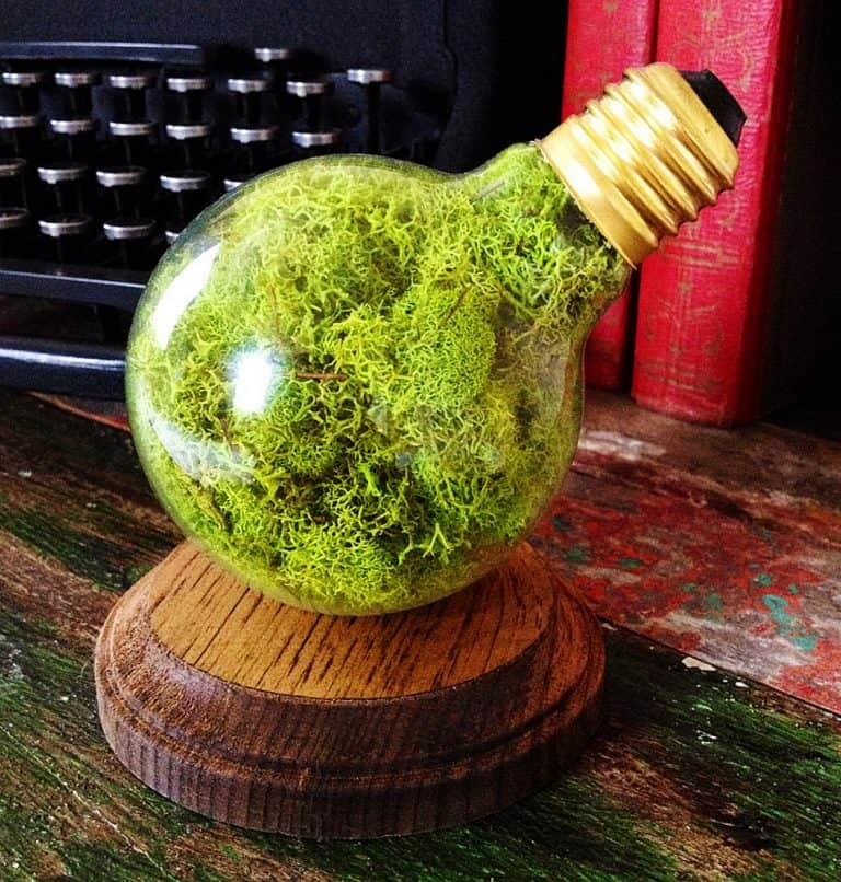 fox-and-dye-design-repurposed-lightbulb-moss-terrarium-nature-inspired-desktop-display
