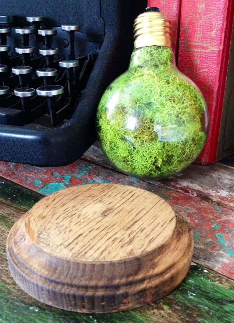 fox-and-dye-design-repurposed-lightbulb-moss-terrarium-walnut-stained-wood