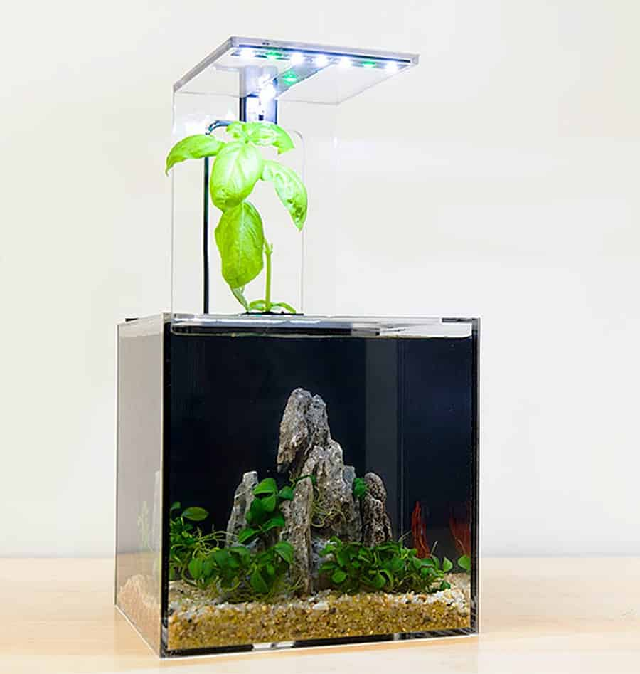 ecoqube-c-aquarium-portable