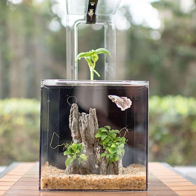 ecoqube-c-aquarium-tank