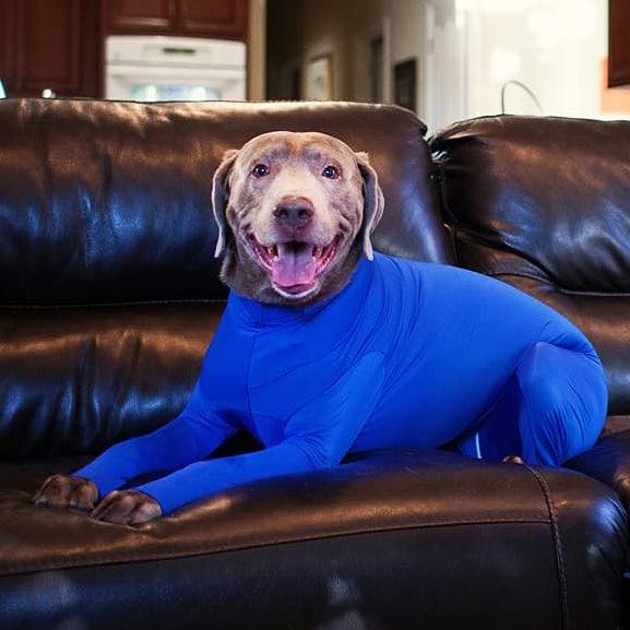 shed-defender-doggy-leotard-warmer