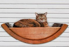 Another man's barrel is another cat's bed.