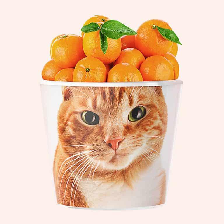 my-facepot-basket