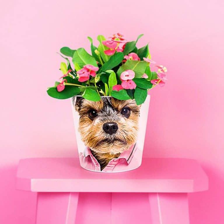 my-facepot-flower-pot