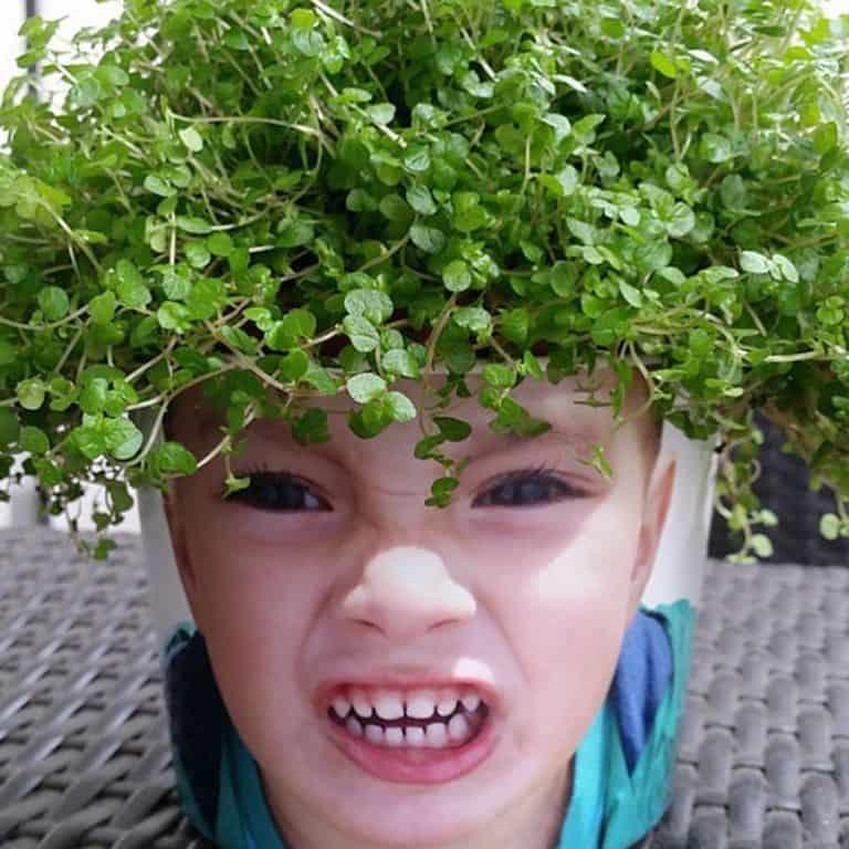 my-facepot-garden-item
