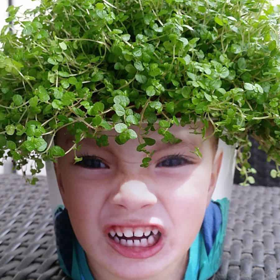 Grow some grass on the top of your head!