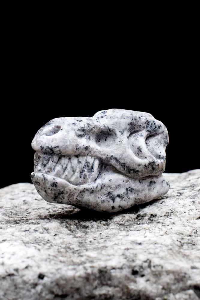 Whiskey-Bones-Granite-T-Rex-Skulls-Drinking-Accessory