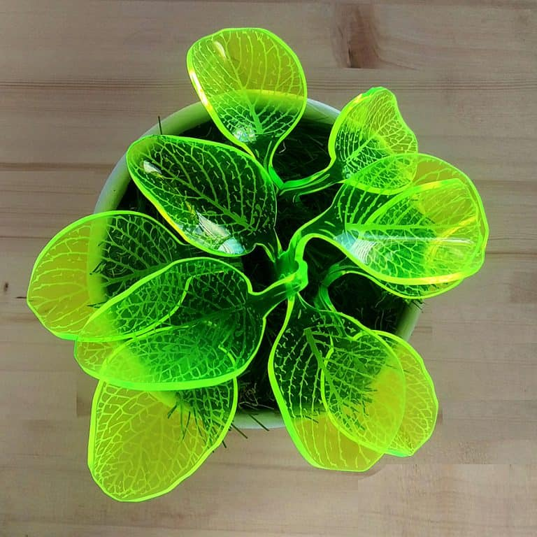 Mar De Fe Night Light Plant Decoration