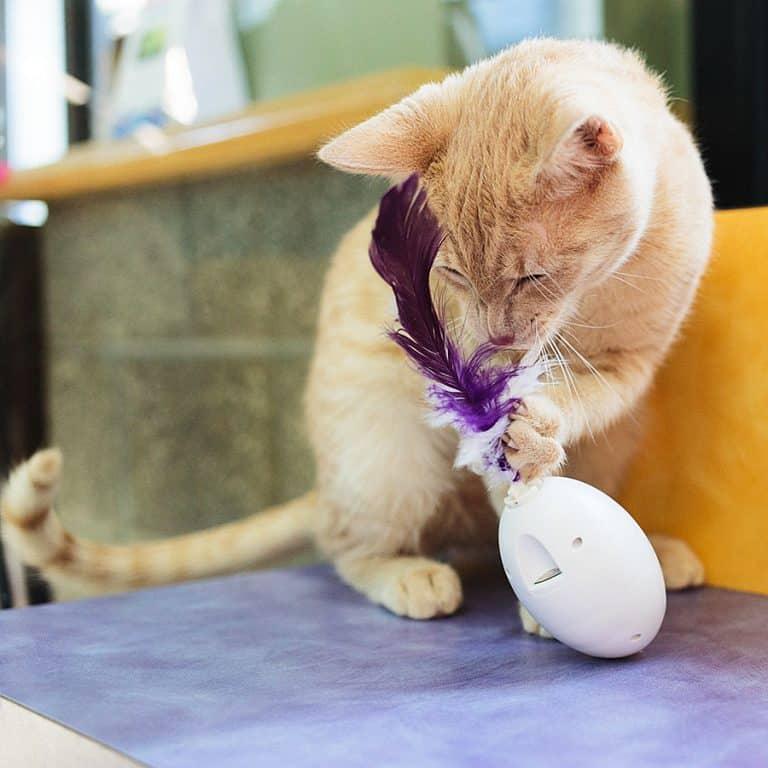 PDX Pet Design SHRU The Intelligent Cat Companion Animal Product