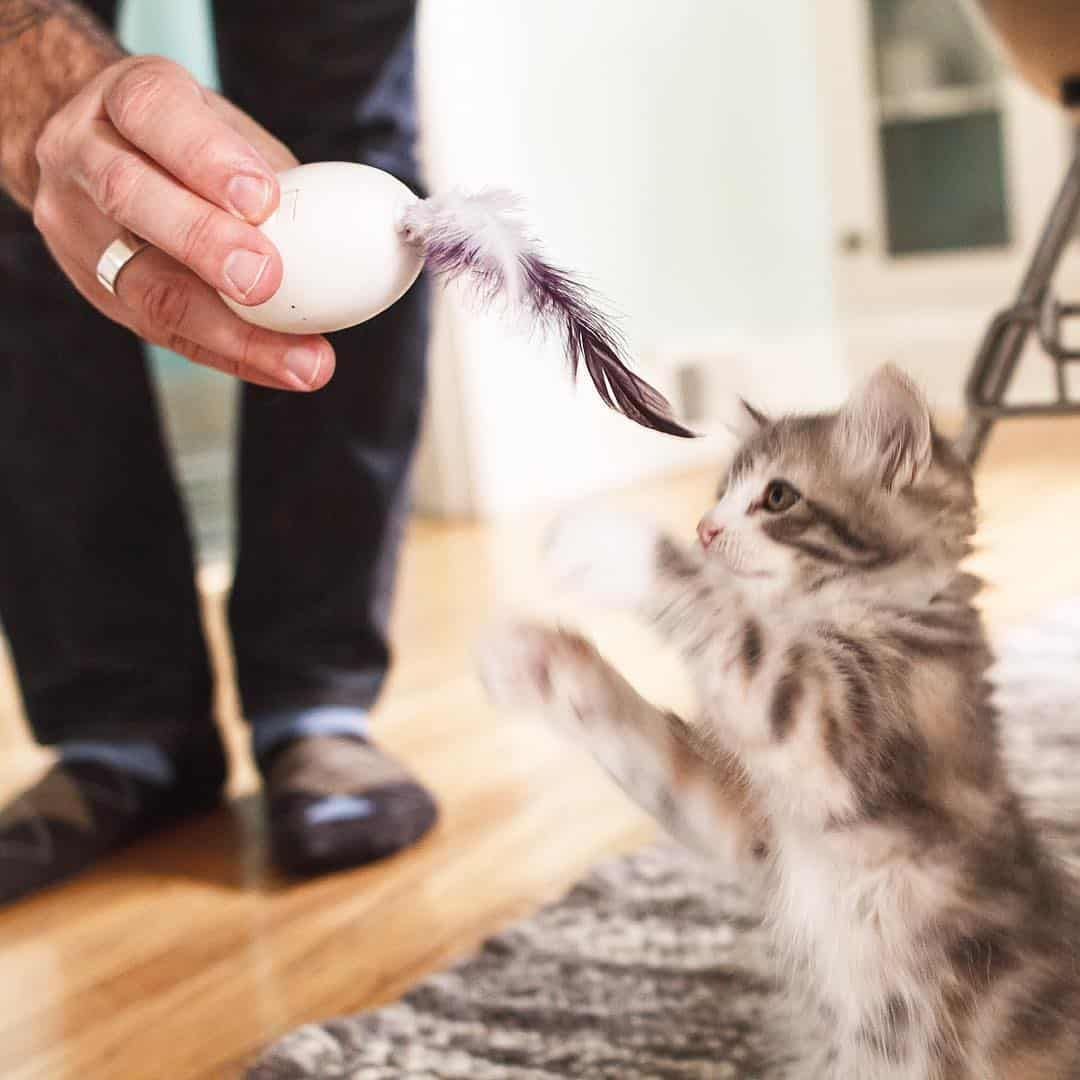 Ignite your kitty's hunting instinct.